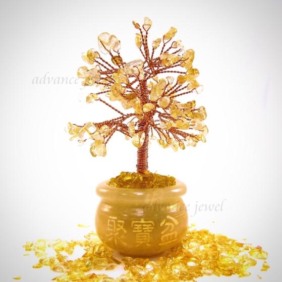 黃水晶發財樹