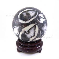 貝殼化石球